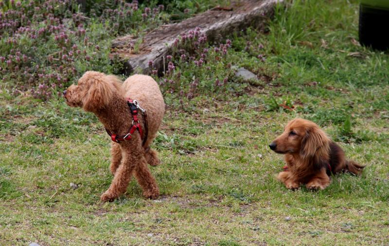 ある日の犬模様(1)