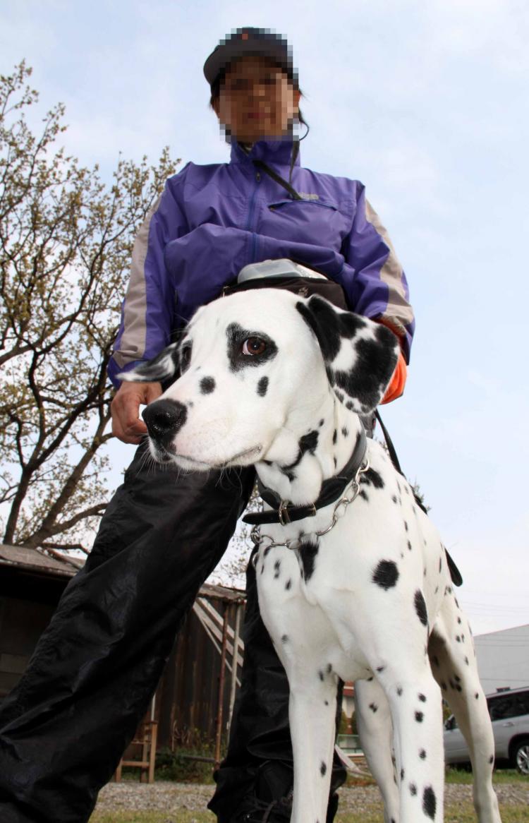 ある日の犬模様(2)