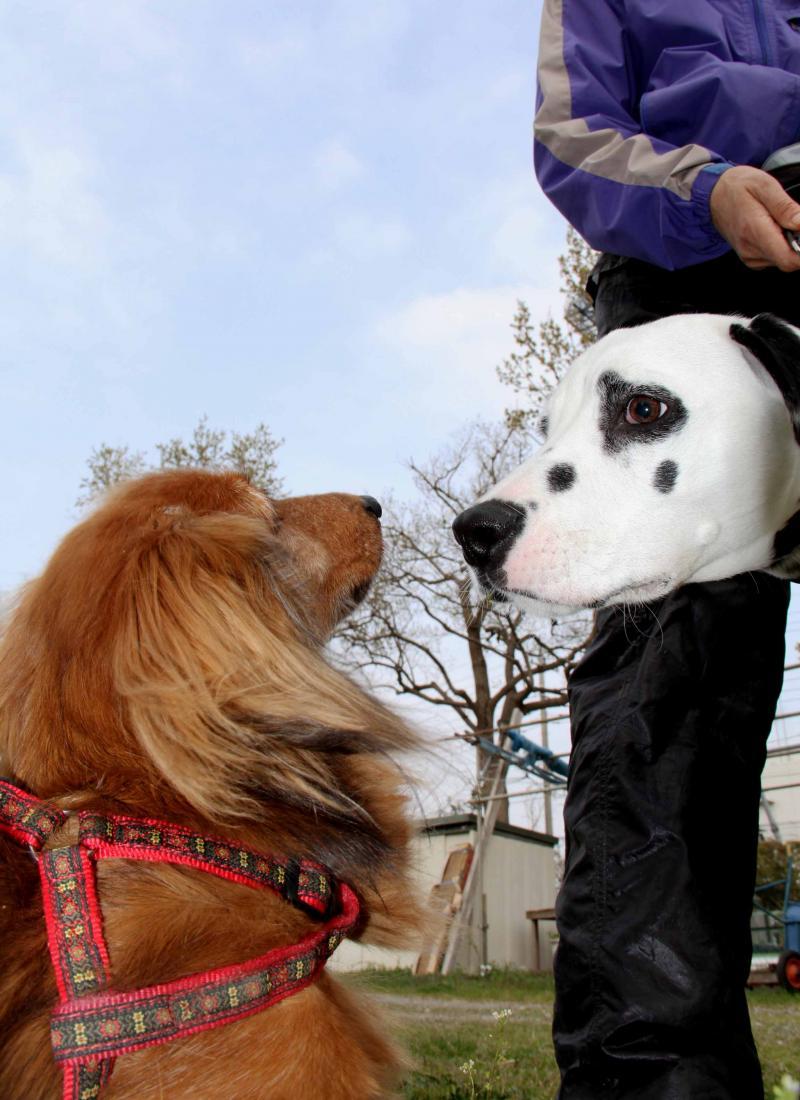 ある日の犬模様(5)