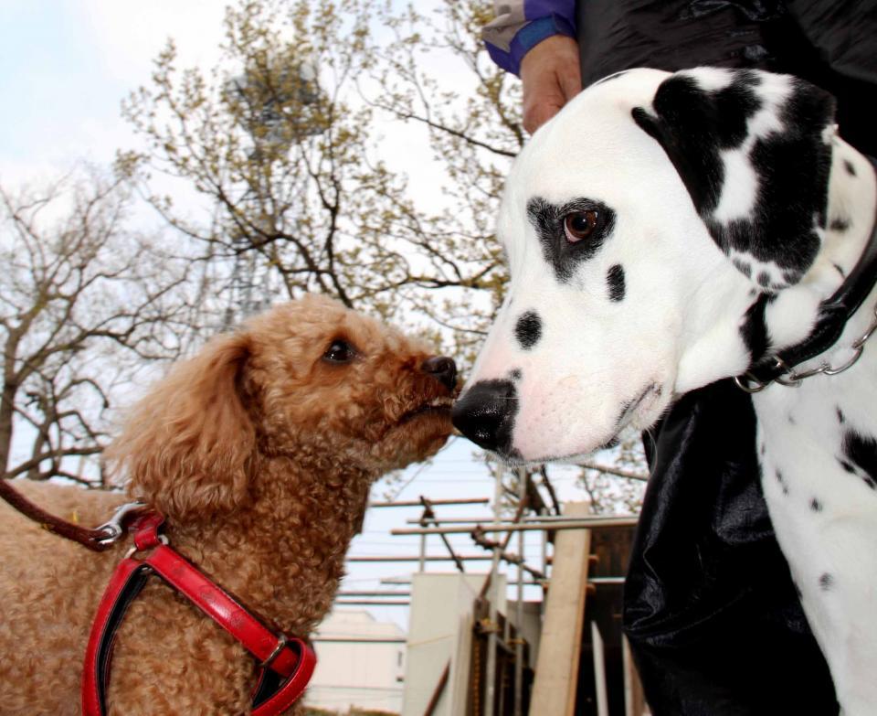 ある日の犬模様(6)