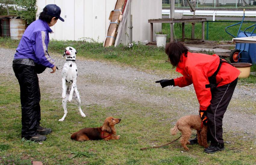 ある日の犬模様(7)
