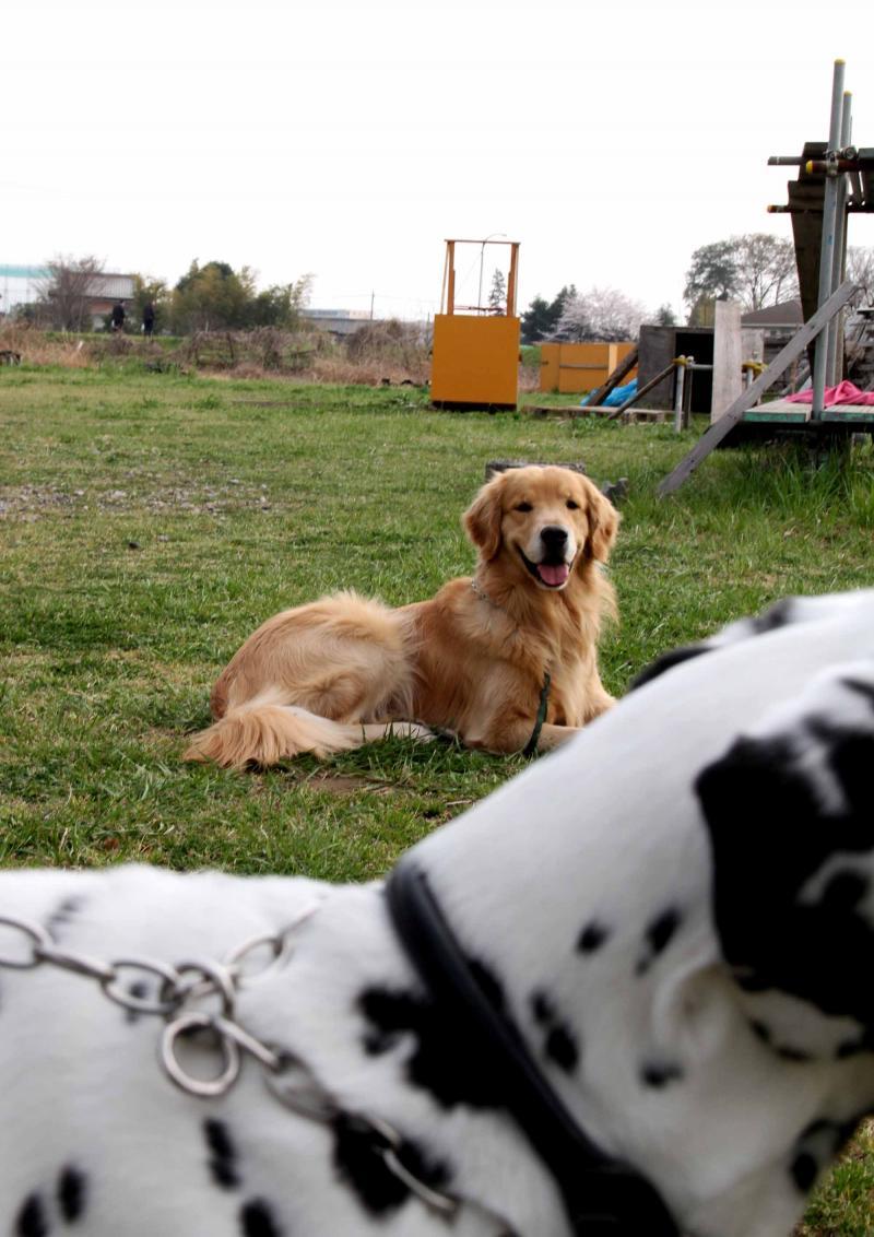 ある日の犬模様(8)