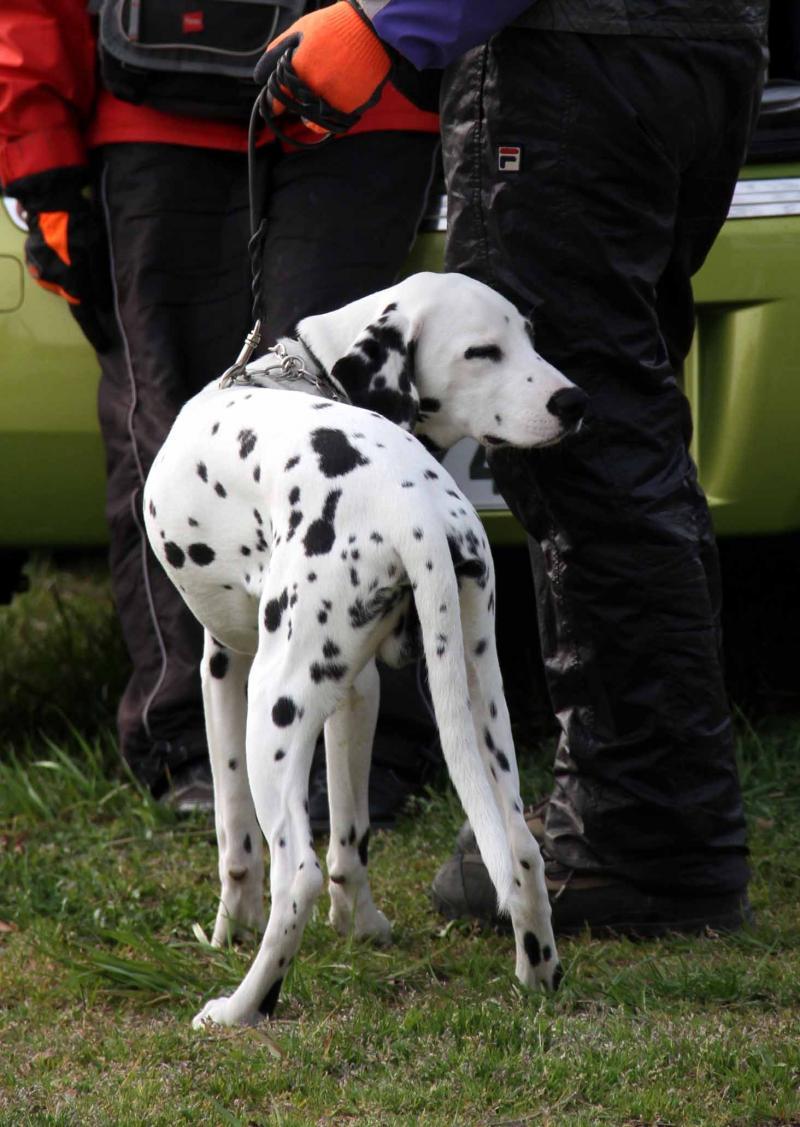 ある日の犬模様(11)