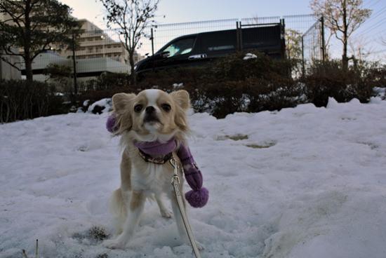 snow13012.jpg