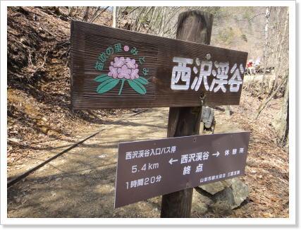 120505nishizawa1.jpg
