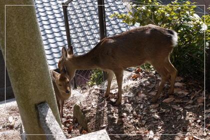 140102miyajima3.jpg