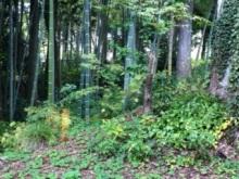 $Seraph Natural Garden ★ 天使とアロマの癒しと導き-神音カフェ竹林