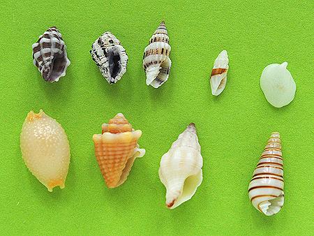 名護のビーチ採集結果