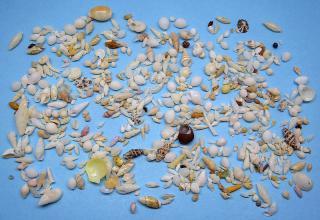 名護のビーチ砂-採集結果