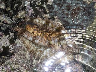 カーミージー貝さがし-12