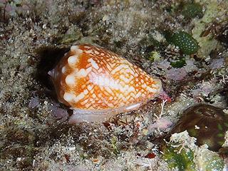 カーミージー貝さがし-15
