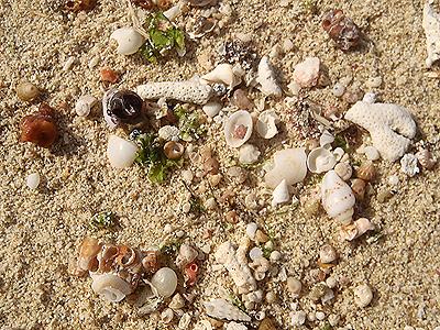 美らSUNビーチ-微小貝