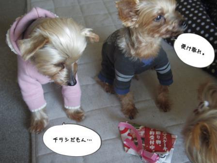 ばーすでぃ20123