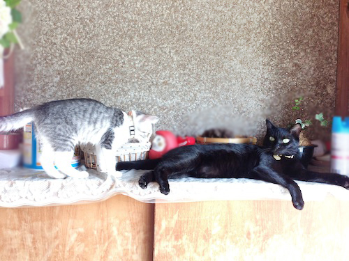 cats023.jpg