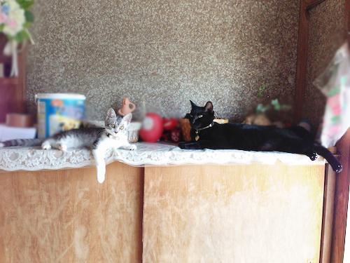 cats024.jpg