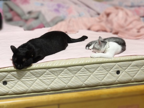 cats025.jpg