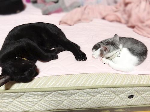 cats026.jpg