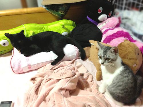 cats027.jpg