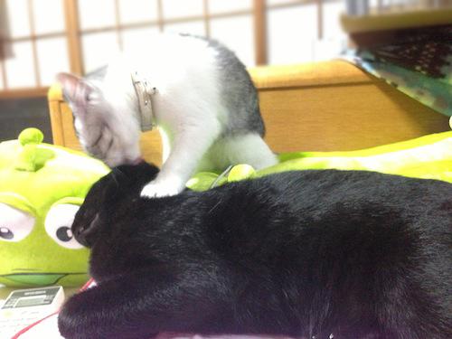 cats028.jpg