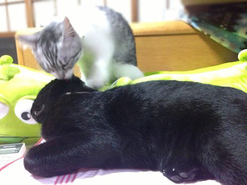 cats029.jpg
