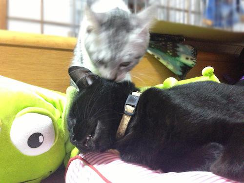 cats030.jpg