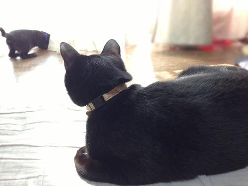 cats031.jpg