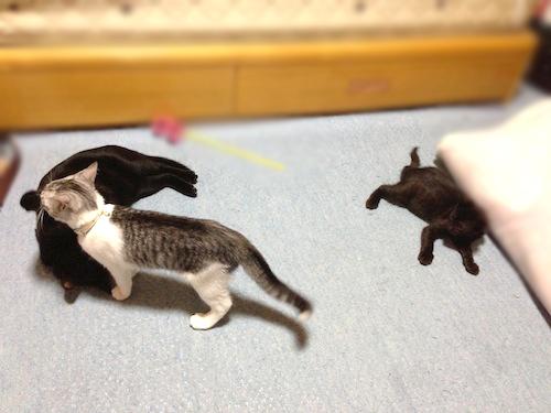 cats032.jpg