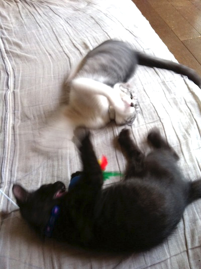 cats033.jpg