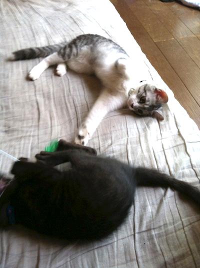cats034.jpg
