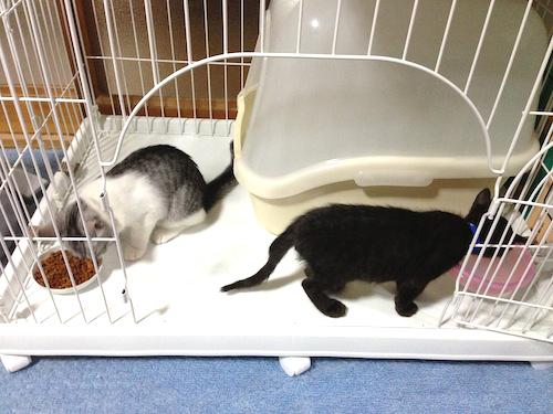 cats035.jpg