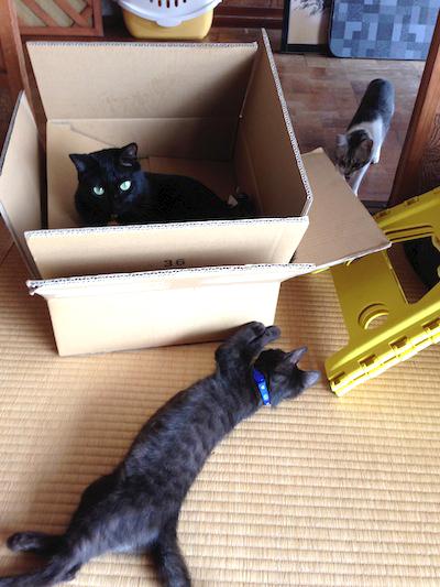 cats036.jpg