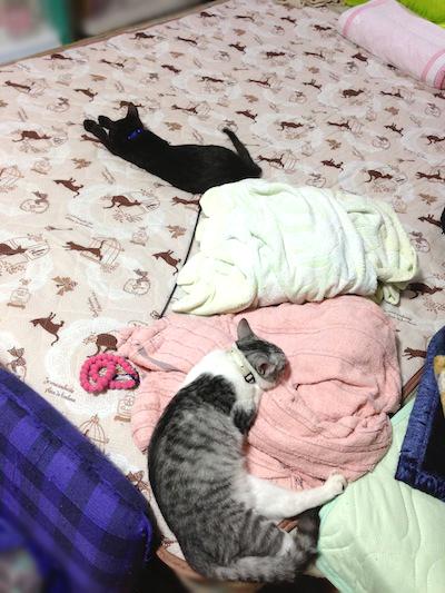 cats038.jpg