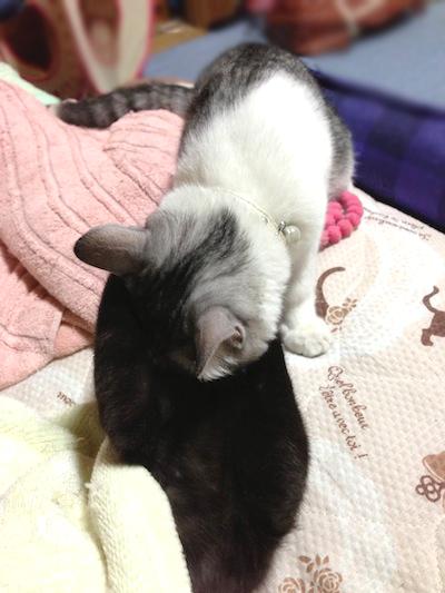 cats040.jpg