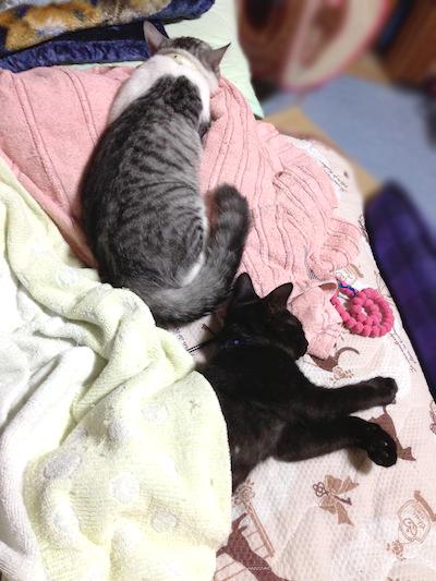 cats041.jpg