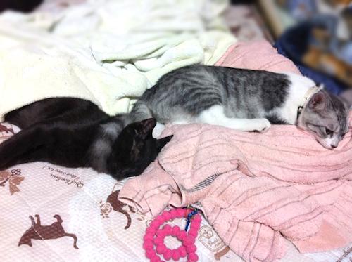cats043.jpg