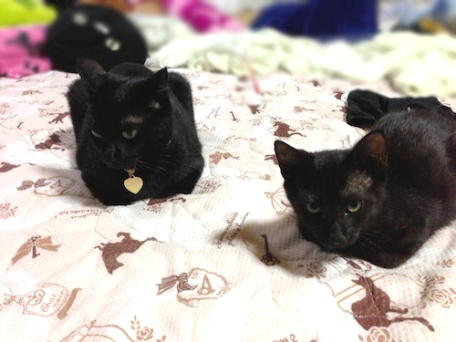 cats045.jpg