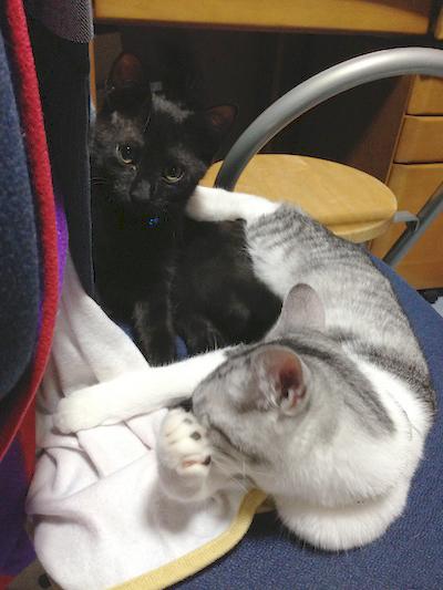 cats048.jpg