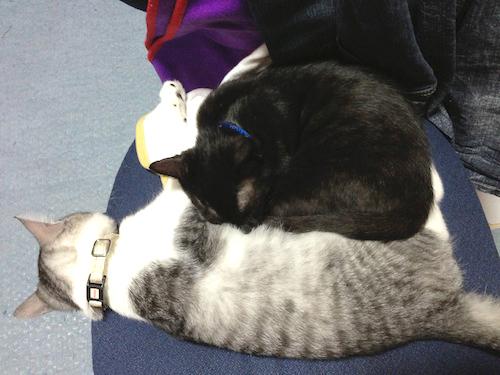 cats049.jpg