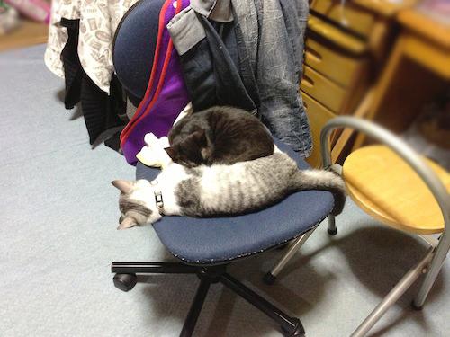 cats050.jpg