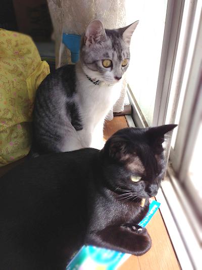 cats052.jpg