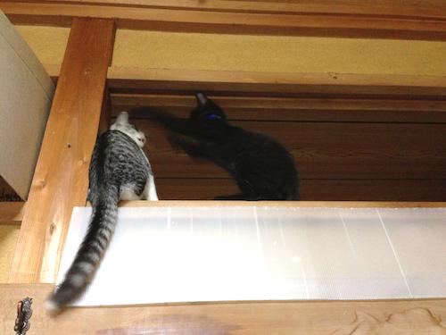 cats053.jpg