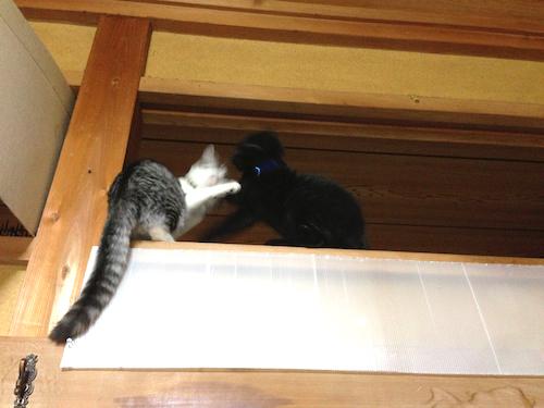 cats054.jpg