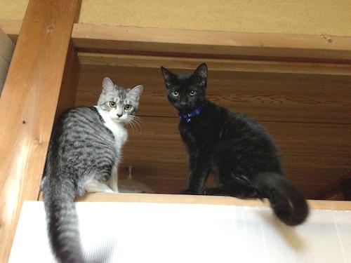 cats055.jpg