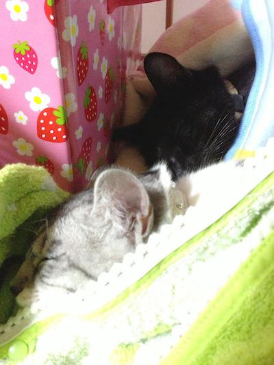 cats057.jpg