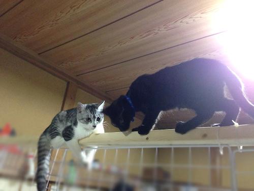 cats058.jpg
