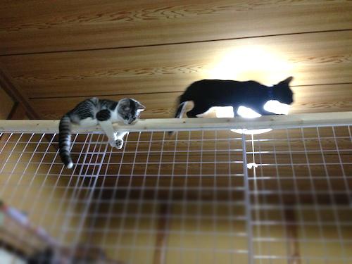 cats059.jpg