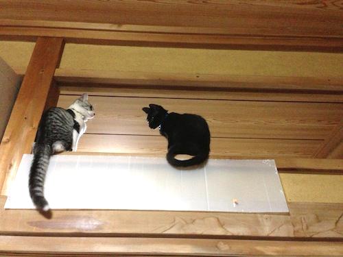 cats060.jpg