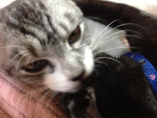 cats063.jpg