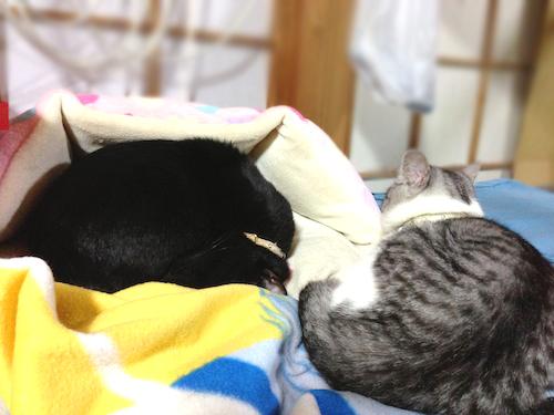 cats066.jpg