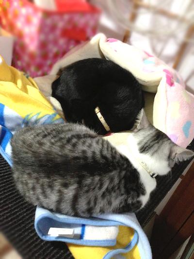 cats067.jpg